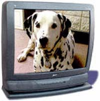 Dalmation sitting on a tv screen